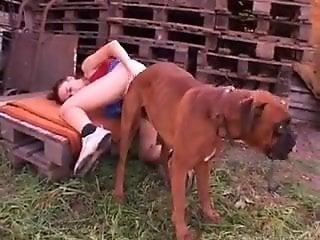 animal prn video