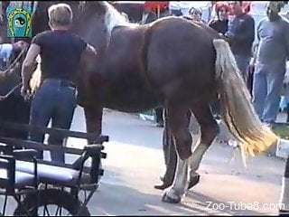 Horse showing off its cock in public and getting hard