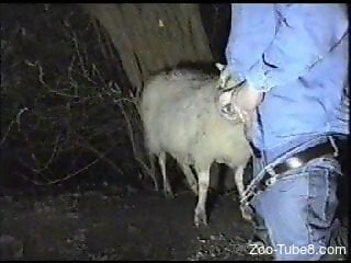Sheep blowjob man