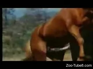 Short zoo porn video celebrating this horse's cock