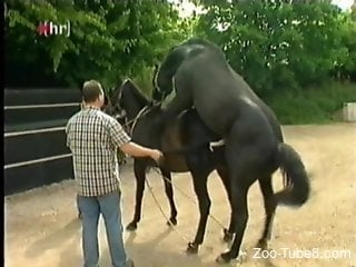 Black stallion fucks an equally black mare outdoors