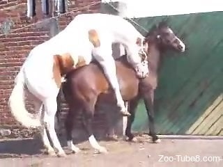 Hot horse getting her pussy destroyed from behind