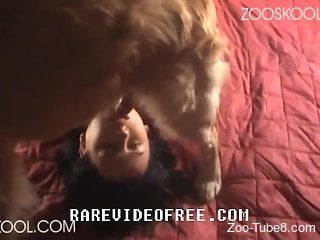 Shaggy doggy plays at home with unsatisfied mistress
