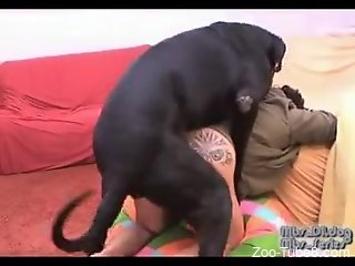 Black doggy nails pussy of fatty mistress from behind
