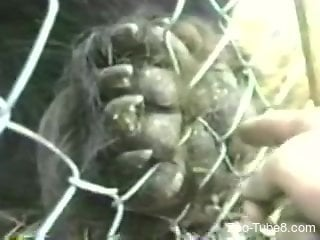 Curious cameraman touches animal's balls through cell