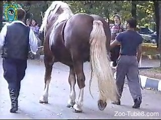 Voyeur secretly films unexpected boner of pretty horse