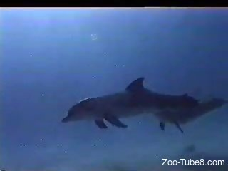 Specialist films sexual life of two attractive dolphins