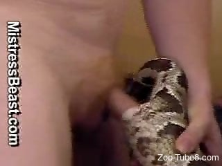 Homemade snake fetish caught on cam with a slutty man