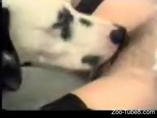 Dalmatian doggo is fucking the living hell out of a babe