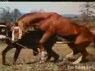 Brown horse fucking a sexy black mare from behind