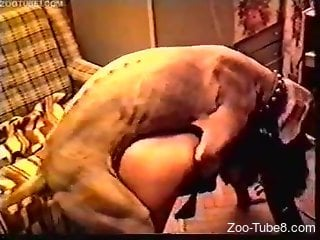 Chunky MILF in latex enjoys hardcore fucking