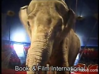 Thirsty circus slut masturbates for the elephant