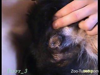 Big-dicked dude fucks a kinky animal on camera