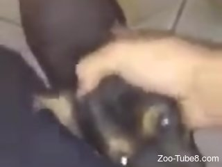 Exciting bestiality POV oral scene with a kinky dog