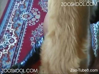 Corset-wearing chick getting fucked hard by a dog
