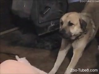 Fat women take turns getting fucked by a slim dog