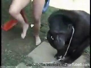 Vulgar and cock-hungry carnival babe seducing an ape