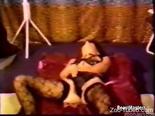 Lingerie-wearing housewives getting fucked silly